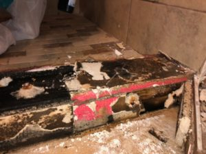 Bathroom Mold Asbestos Removal 1